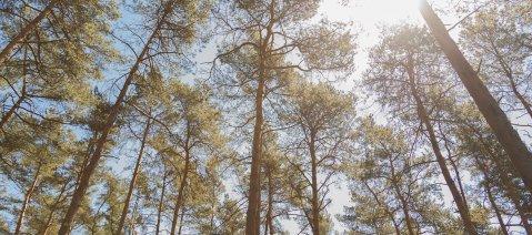 wineo Laminatboden Nachhaltigkeit Wald Bäume Holz Natur